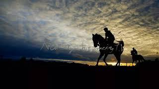 ライブ地方競馬【東京シンデレラマイル】プロ競馬予想TV(horse Racing Sports)