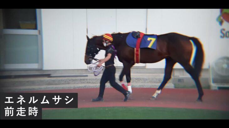 2021.7.30【園田競馬 サンケイスポーツZBAT賞】予想参考