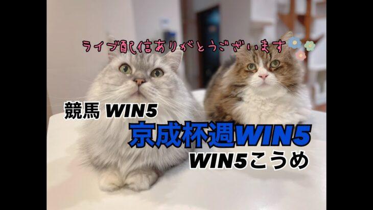 競馬WIN5京成杯編
