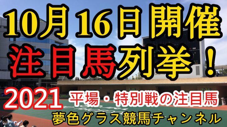 【注目馬列挙】2021年10月16日JRA平場特別戦!好調の新馬戦は3場の5R推奨馬が!
